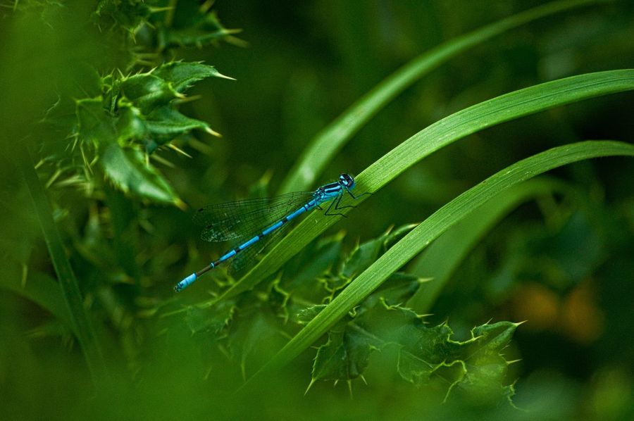 Green Color One Animal Animal Themes Animals In The Wild Animal Wildlife Nature Plant Outdoors Day Growth Damselfly No People Beauty In Nature Close-up Grass Dragonfly EyeEmNewHere