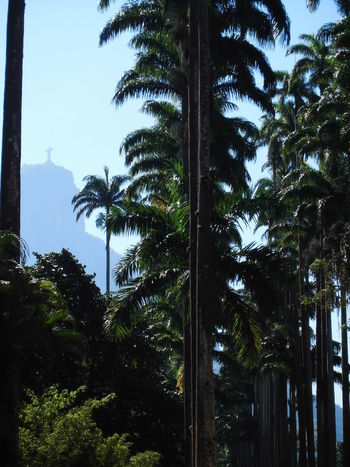 Botanical Gardens Jardimbotanicorj Rio De Janeiro ChristTheRedeemer Palmtrees Nature Beauty In Nature