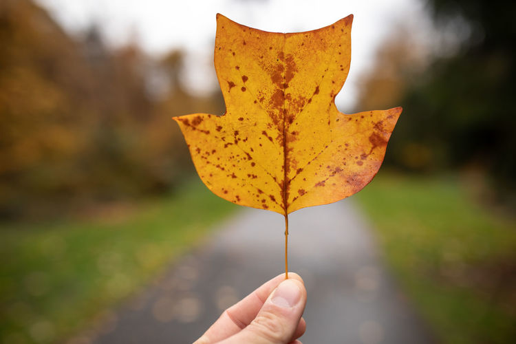 Human Hand Human Body Part One Person Leaf Plant Part Hand Unrecognizable Person Autumn Focus On Foreground Holding Body Part Real People Change Nature Close-up Finger Day Human Finger Yellow Lifestyles Outdoors Maple Leaf Autumn Collection Human Limb Leaves