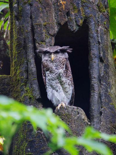 Owl Owl Animal