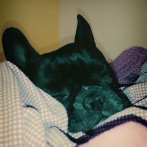 Feliz día mi amor🎉 Internationaldogday Lovemydog Lovemybully Dog Dogsofinstagram Dogstagram Dogs