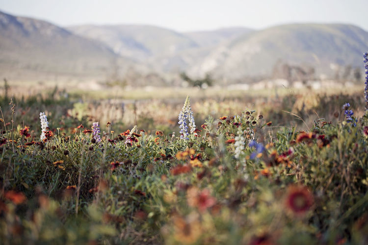Agriculture Beauty In Nature Day Field Flower Flowers Focus On Foreground Fragility Freshness Growth Landscape Mountain Nature Nature No People Outdoor Pictures Outdoors Outside Plant Rural Scene Scenics Selective Focus South Africa Tranquil Scene Tranquility