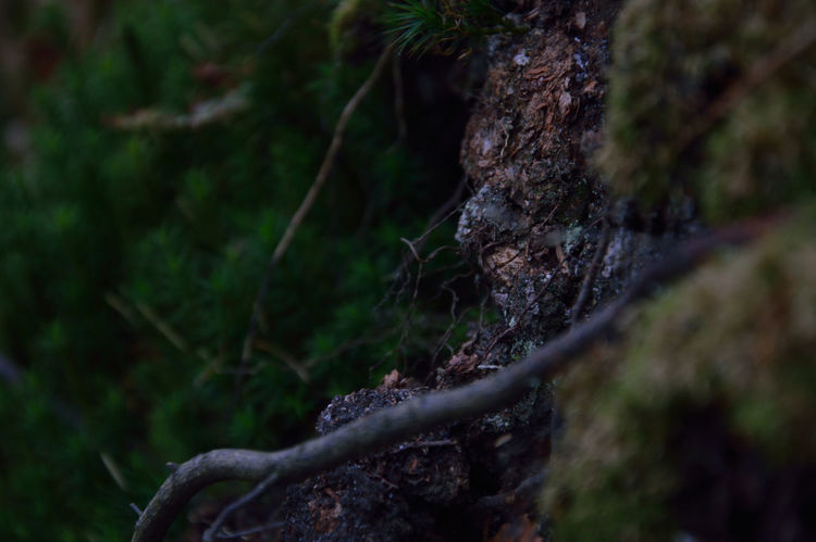 Bark Bokeh Botany Branch Cliff Cliffs Close-up Forest Green Miniature Miniforest Mossy Nature Plants Tree WoodLand