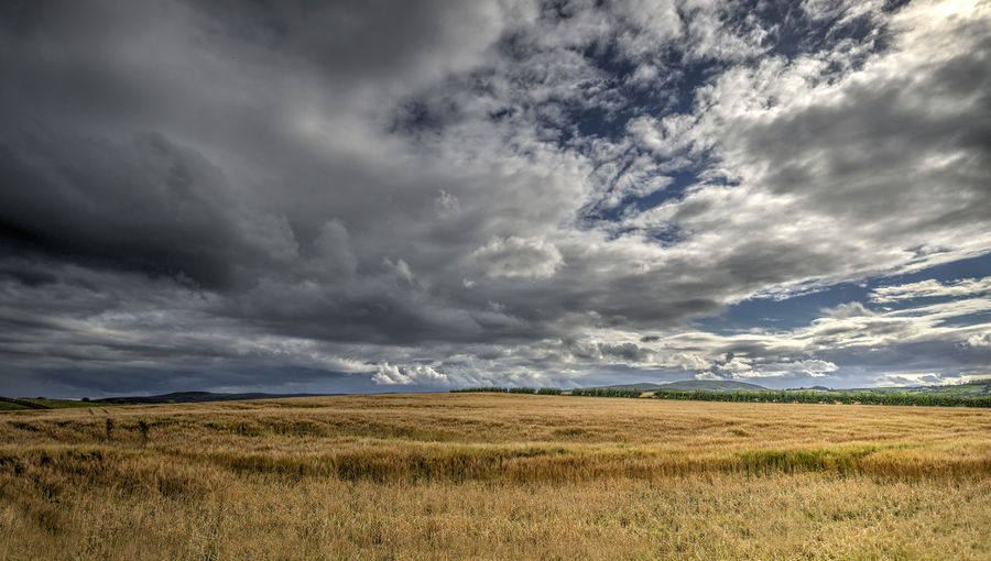Scenic view of meadow landscape against cloudy sky