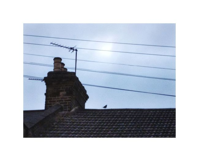 Loneliness Bird