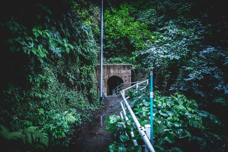 Drastic Edit Atmospheric Mood Green Showcase July EyeEm Best Shots Share Your Adventure Enjoying Life EyeEm Nature Lover Nature Nature_collection Getting Inspired Capture The Moment From My Point Of View Check This Out Light And Shadow Going The Distance EyeEmBestPics Walk This Way EyeEm Gallery Beautiful Nature Nature On Your Doorstep Exploring New Ground Travel EyeEm Masterclass Fine Art Photography