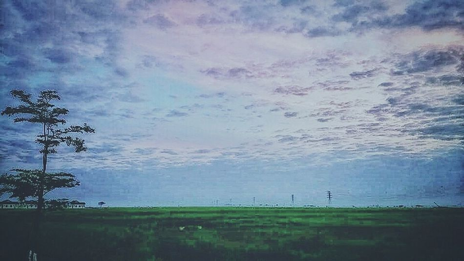 Outdoors Landscape Rice Field Flowers, Nature And Beauty At Alor Setar Malaysia
