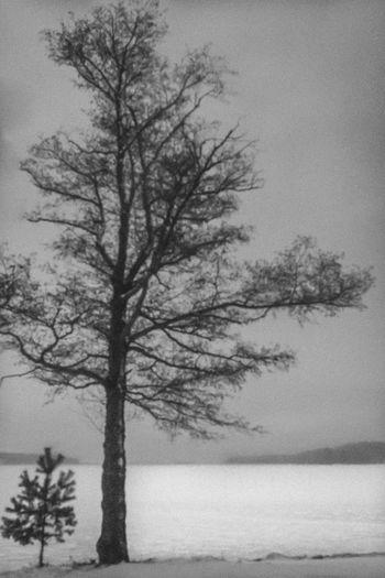 Winter by City 2.0 - The Future Of The City Tree Landscape Eskilstna Gatufoto Eskilstuna Eskilstuna Gatufoto