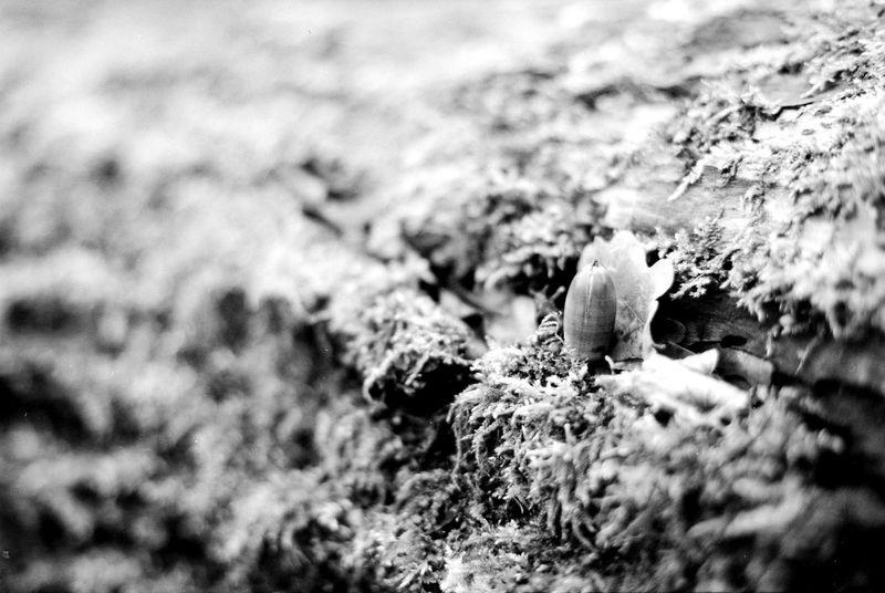 Location: Loenscher Park Canon EOS 50E | TMax 100 -> 200 | D-76 Blackandwhite Canon EOS 50E EyeEm Best Shots - Black + White Kodak D-76 Kodak TMax 100 Monochrome Nature Wood