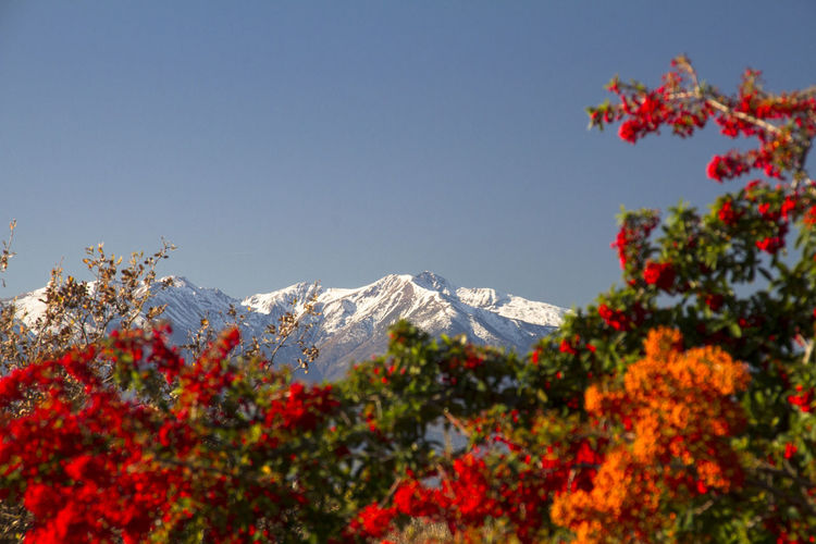 Canigou Mountain Catalan Plant Beauty In Nature Mountain Sky Flower Flowering Plant Nature Tree Winter Growth No People Cold Temperature Snow Scenics - Nature Day Clear Sky Copy Space Tranquility Freshness Fragility Outdoors Snowcapped Mountain