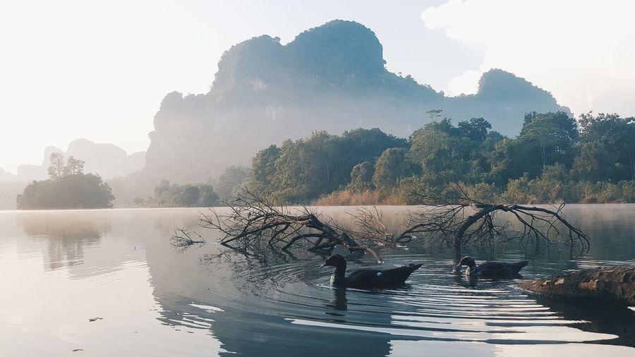 Swans swimming on lake against sky