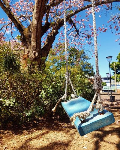 Swing hanging on tree trunk in park