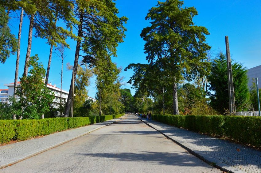 Clear Sky Day Footpath Grass Nature Outdoors Road Shadow Sky The Way Forward Tranquil Scene Tree Vanishing Point