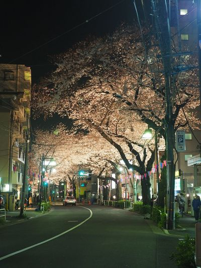 #cherryblossom Architecture Built Structure City City Life City Street Diminishing Perspective Empty Illuminated Lighting Equipment Night No People Outdoors Road Sky Street Light The Way Forward Tree Vanishing Point