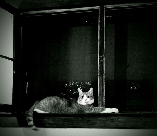 Cat On The Window Hanging Out Relaxing Black And White
