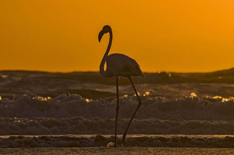 Silhouette bird in a sea