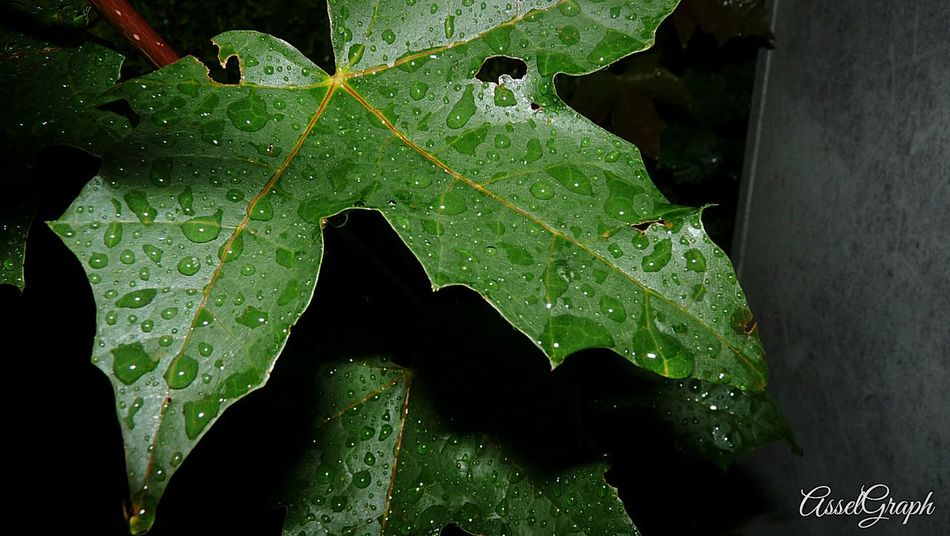 Beauty Raindrops Nature Streetphotography Lumixlounge Macro Nature Panaconiclumix Photoofrheday Lumixmasters Lumixlife Pictureoftheday Lumix Lumixlove No People Picoftheday Plant Leaf Rainy Days Rain Rain Drops Plants 🌱 Beauty In Nature