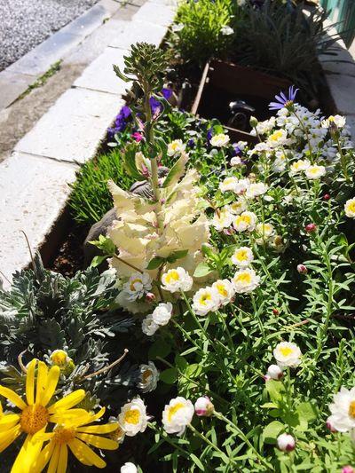紫牡丹 Flowers Goodmorning :)
