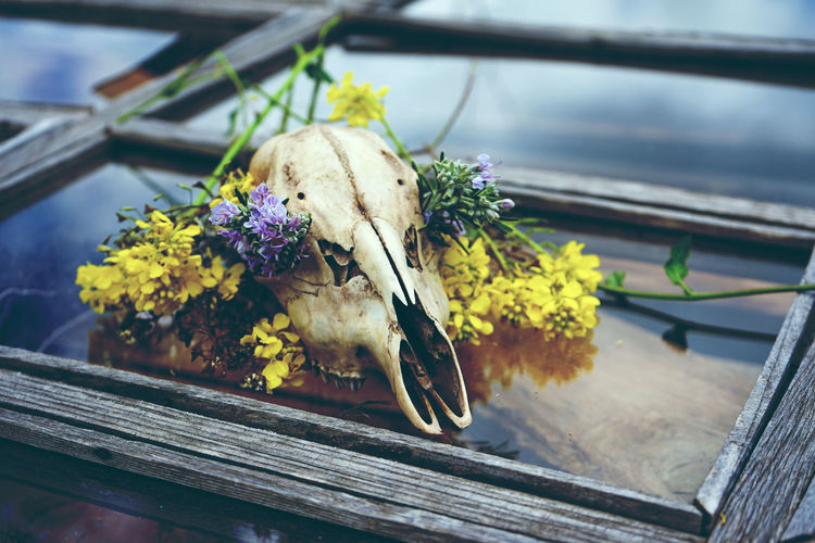 High angle view of flowers with human skull on table