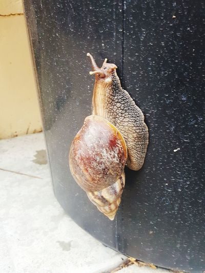 Hello snail ! Animal Themes Snails🐌 Snail Shell Close Up Snail Collection Snail Is Chilling Its Life