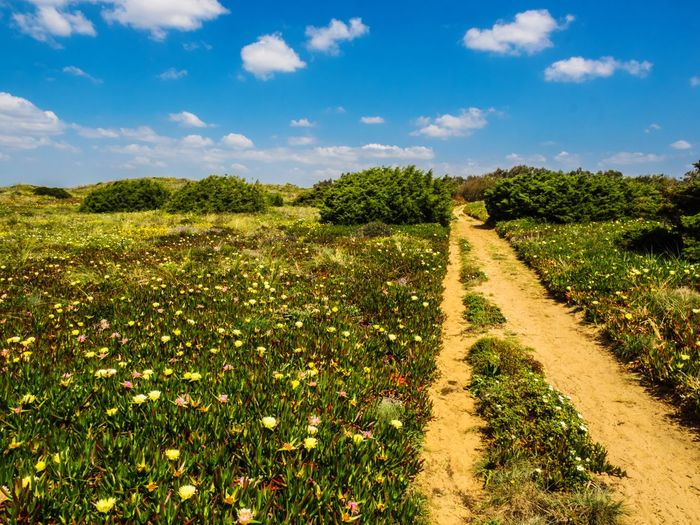 Rota Vicentina Hiking Cloud Nature Landscape Tranquility Scenics Tranquil Scene Field Grass Beauty In Nature Rural Scene The Way Forward Plant Outdoors No People Green Color Sky