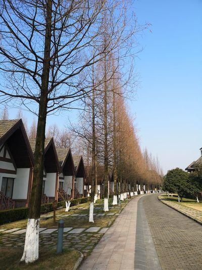 Tree Clear Sky