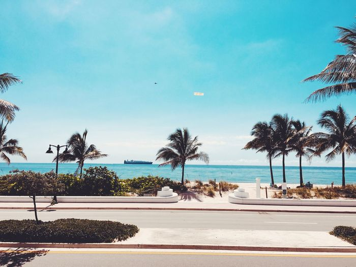 Las Olas Blvd Fort Lauderdale Beach Fort Lauderdale  Florida Tree Water Plant Sky Sea Nature Beauty In Nature Beach Day Land Scenics - Nature Sunlight City Outdoors No People Tranquil Scene Architecture Tranquility Palm Tree Horizon Over Water
