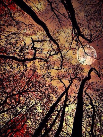 Autumn nights ??