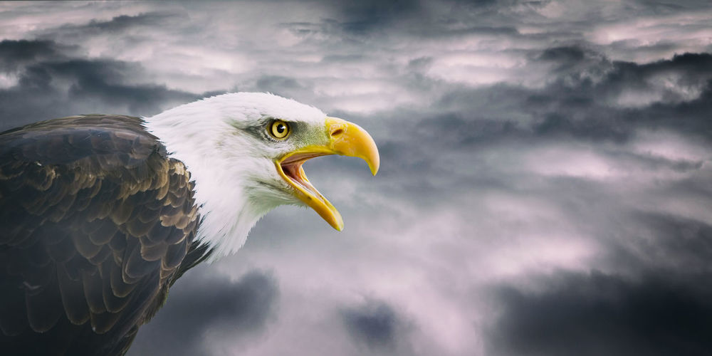 Close-up of eagle against cloudy sky