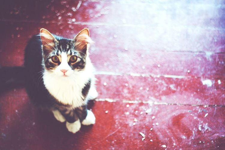 Momo the cat! Photography Cat Vintage Close-up Adorable Indoors  Portrait Animals