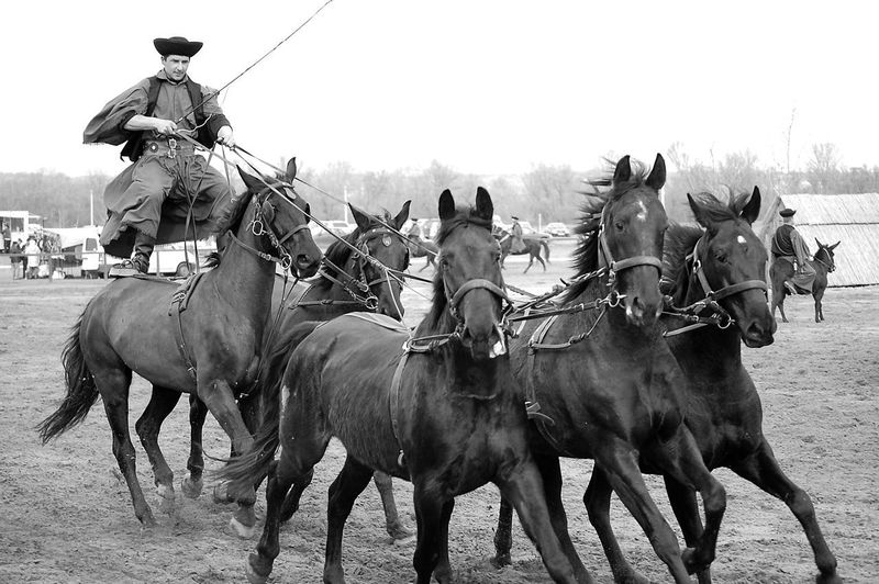 Outlaw 5 Amimals Domestic Animals Horse Medium Group Of Animals Nature Outdoors OutLaw Rural Scene Wildwest Working Animal