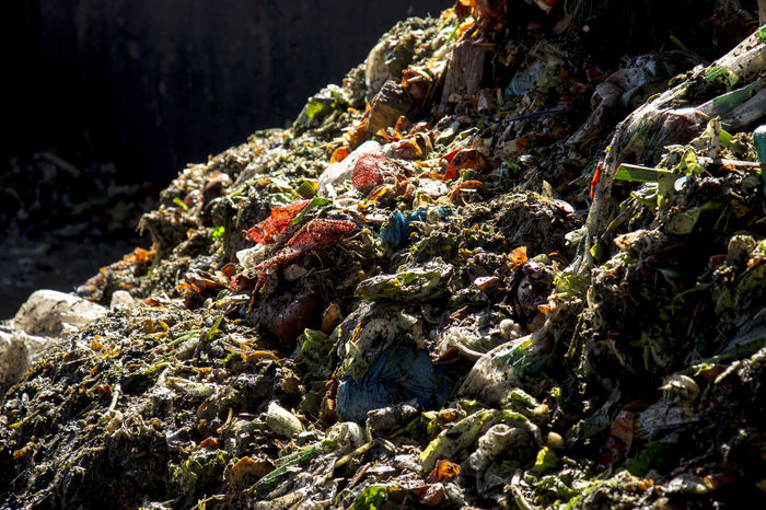 project about food waste Aliment Documentary Photography Food Waste Awareness Food Waste Junk Photojournalism Rubbish Trash Documentary Famulari Food Garbage Nature No People Rotten Rotten Food Rotten Fruit Waste