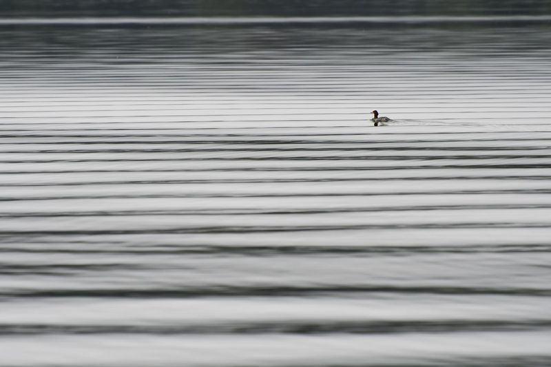 Silhouette of man on rippled water