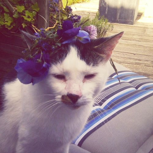 he didn't appreciate the flowercrown I made him. Cats
