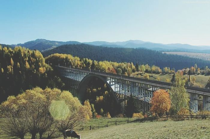 Tree Nature Plant Landscape Tranquility No People Beauty In Nature Outdoors Sky Mountain Day bridge Sunlight Looking At Camera The Great Outdoors - 2017 EyeEm Awards
