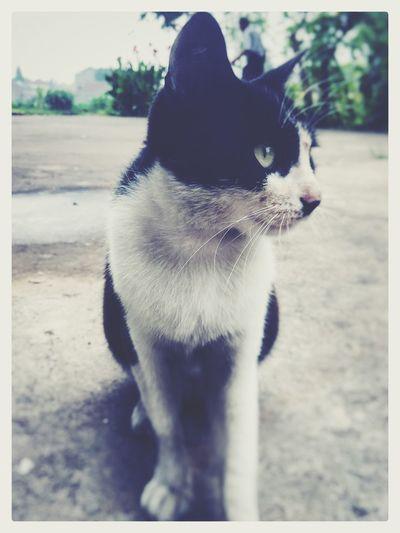 黑猫警长 Black Cat Hello World Relaxing Taking Photos Enjoying Life
