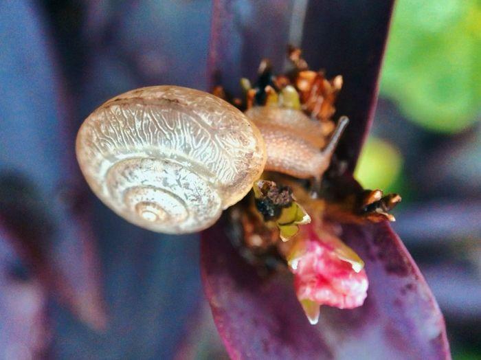 Snails 🐌 Leaf