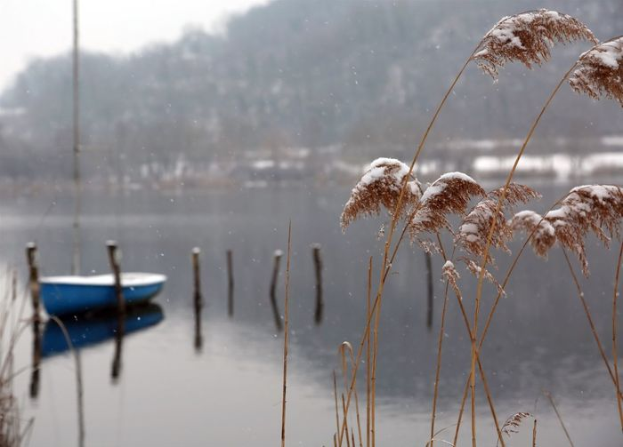 winter landscape with snowy tufts of grass and the lonely boat moored on the jetty of the lake December Fimon Lake Frozen Ice Lago Di Fimon Snow ❄ Winter Wintertime Arcugnano Boat Cold Fimon Italian Italy Little Lake Outdoor Outdoors Reeds Snow Snow Covered Snowy Vicenza Water Water Lake