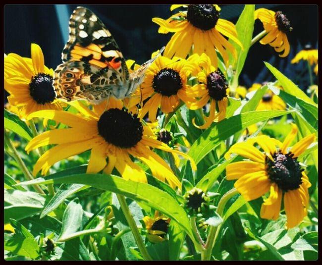 Beautiful Flowers Nature Flower & Butterfly