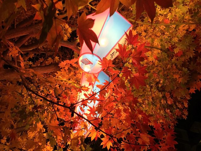 Low angle view of orange leaves