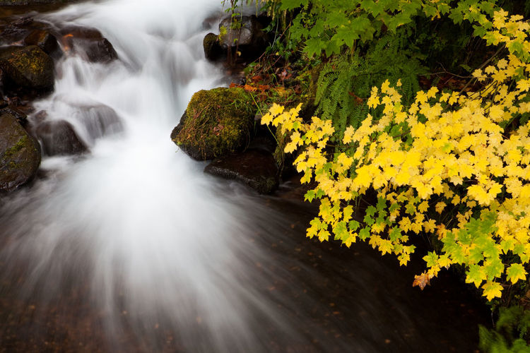 Long exposure of a waterfall and autumn colored leaves in the Columbia Gorge area of Oregon Autumn Autumn Leaves Fall Colors Oregon Water Falls Beauty In Nature Environment Fall Leaves Flowing Flowing Water Forest Long Exposure Motion Nature No People Non-urban Scene Outdoors Plant Power In Nature Rainforest Scenics - Nature Stream - Flowing Water Water Waterfall Yellow