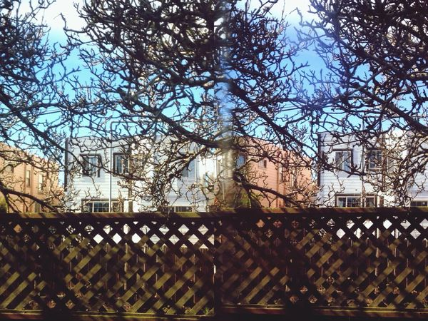 Thru The Fence 3D Photo In My Garden Iphone 5