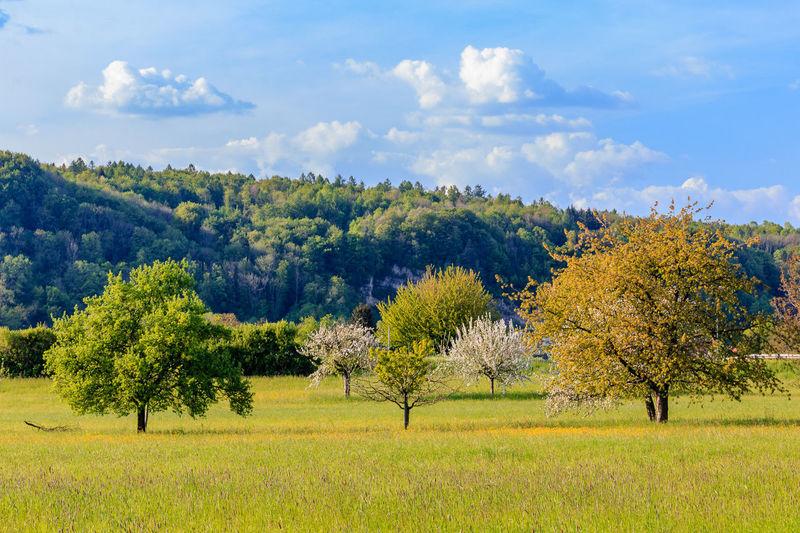 Endlich blüht wieder alles Beauty In Nature Blue Sky Cloud Cloud - Sky Clouds Field Idyllic Landscape No People Outdoors Sky Tree Tree Trees