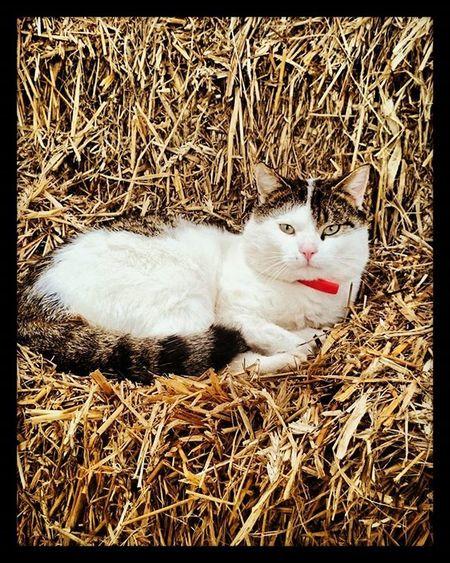 Thank a farmer! Jabekojo Farmer4life Farmer365 Cat