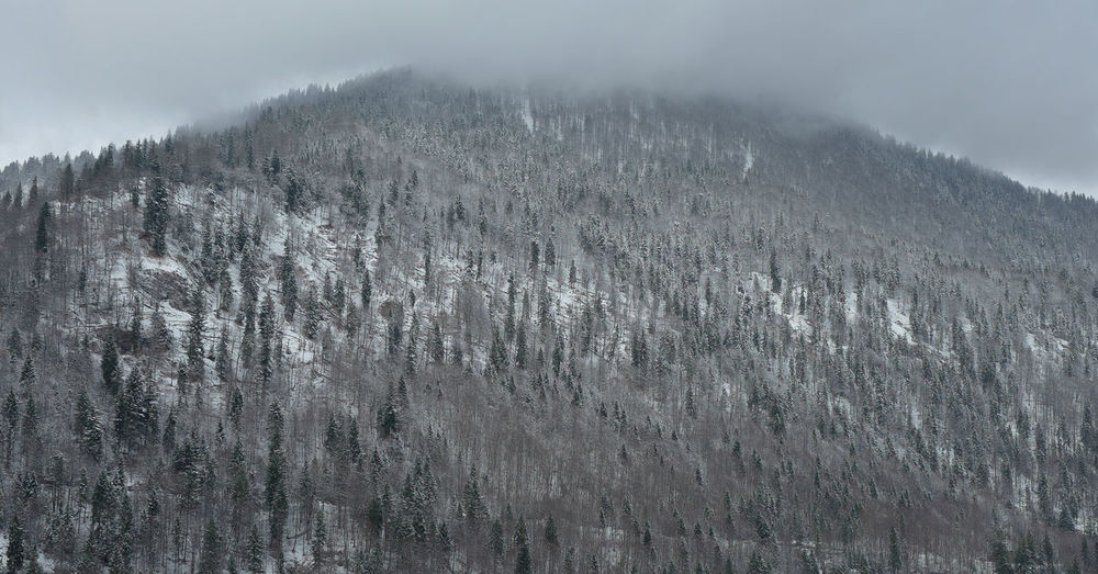 Close-up of snow covered mountain