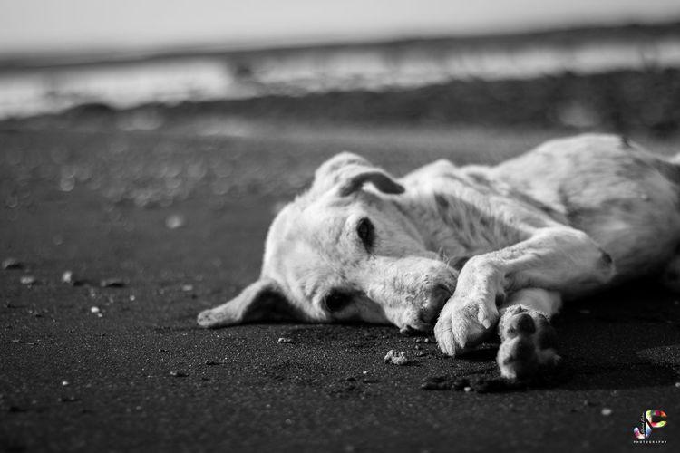 Dog sleeping on street