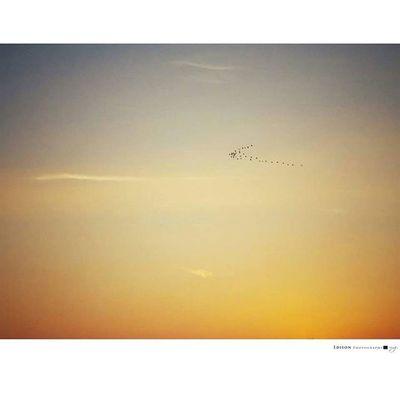 【 那處 】 不顧一切 總是朝著逆風飛 回歸遙遠的 那處 LGG4 Sky 365Snap Bird Beautiful Enjoy