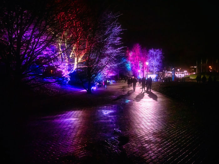 Night Illuminated Tree City Group Of People Nature Architecture Plant Water Real People Lighting Equipment Outdoors People Celebration Building Exterior Lifestyles Street Incidental People Silhouette Light