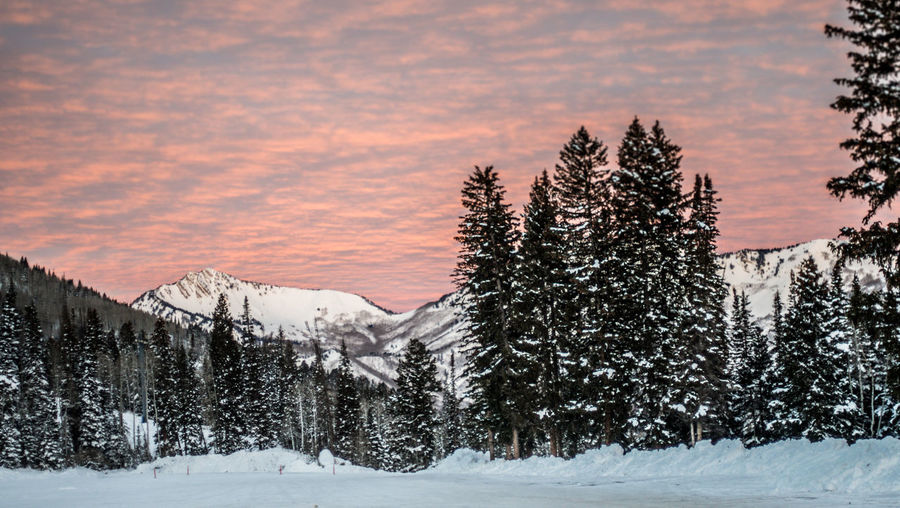 Sunrise over Big Cottonwood Canyon, Utah Beauty In Nature Cold Temperature Forest Landscape Mountain Nature No People Outdoors Scenics Sky Snow Sunset Tree Winter