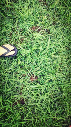 Summer Days Green Tone River Jam